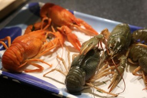 Crayfish - before and after cooking